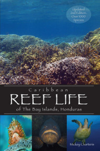 Caribbean Reef Life of the Bay Islands, Honduras